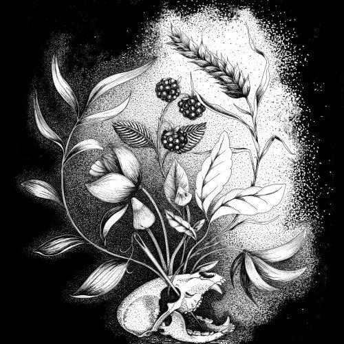 Bear skull, illustration. Elléa Bird, illustratrice, Lyon.