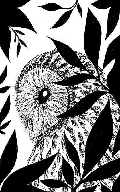 Night Owl, illustration. Elléa Bird, illustratrice, Lyon.